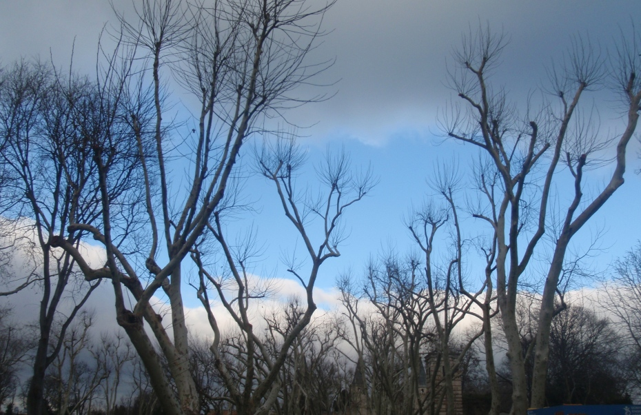 Trees and sky.