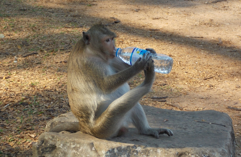The bottled water is always safer.