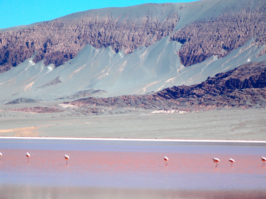 I thought flamingoes were only found at the altitude of Miami, but here they are at 11,300 feet. Sand and mud cake the crevasses of the mountain behind.