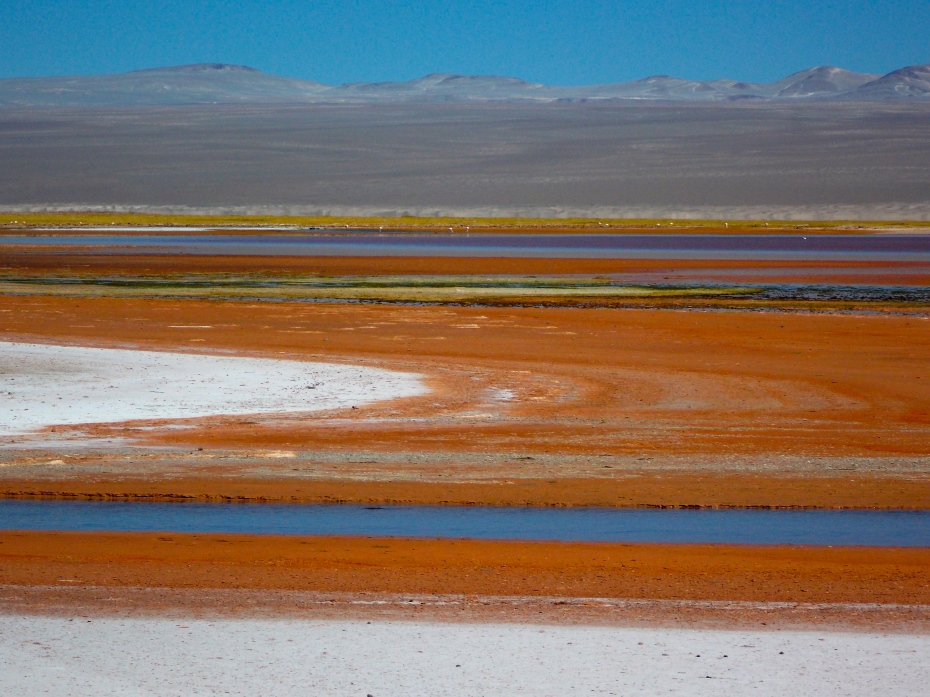 Between the soft whiteness of the dunes and the hard blackness of the volcanic rock were every conceivable color and texture.