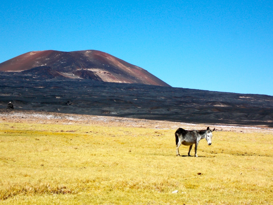 This is Carachi Pampa, the volcano, and Donald, the donkey.
