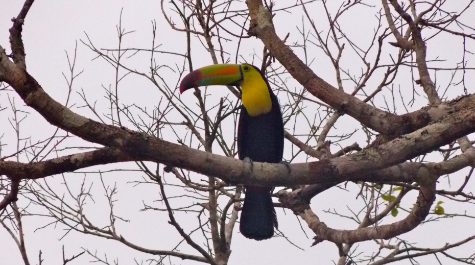 Who can? You can. Toucan.