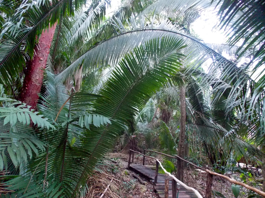 The huge palms brought atmosphere to the Chiminos Island Lodge.